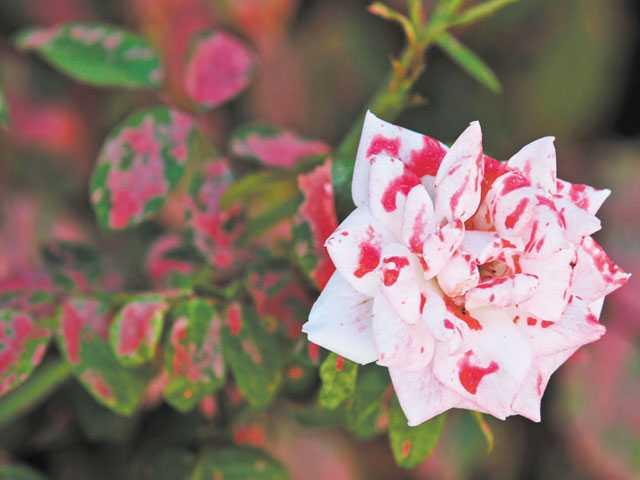 Flower photo - news in santa clarita ca