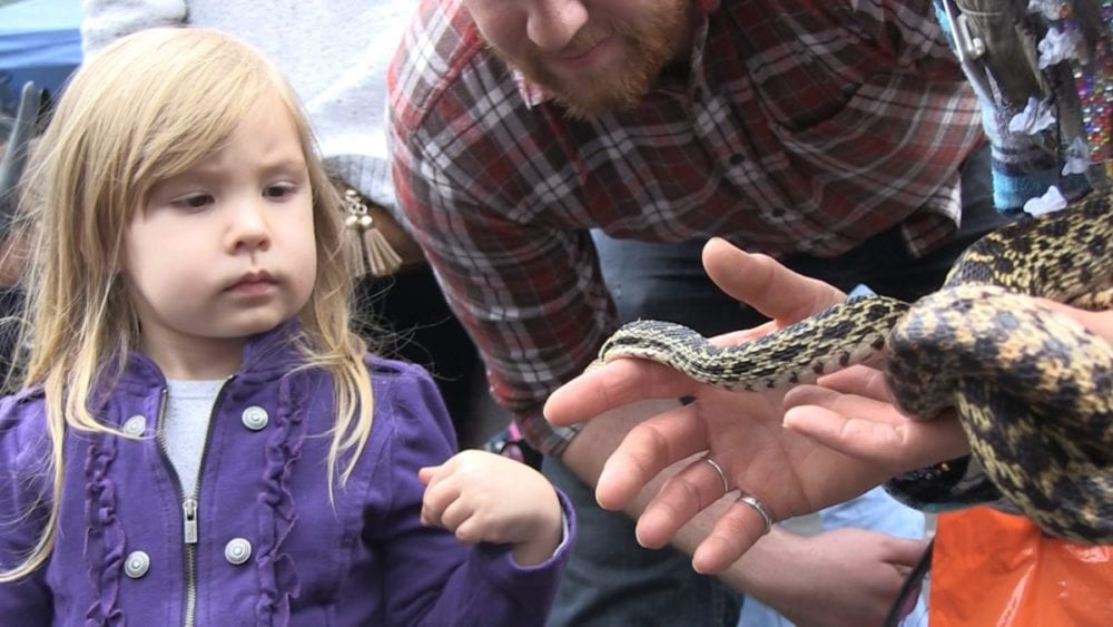 Marlie Clifton, 3, ponders whether to touch a gopher snake held by a Placerita Canyon Nature Center docent.