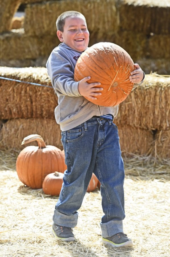 Zack Martin, 6, of Valencia picks out his pumpkin at the inaugural Harvest Festival held at Gilchrist Farm in Saugus on Saturday. The harvest Festival has a pumpkin patch, pumpkin decorating, straw bale maze, horse drawn wagon rides, petting zoo, live entertainment, face painting, crafts and food. Hours for the Fall Festival and Pumpkin Patch continue until October 31st, 9AM - 6PM daily. Dan Watson/The Signal
