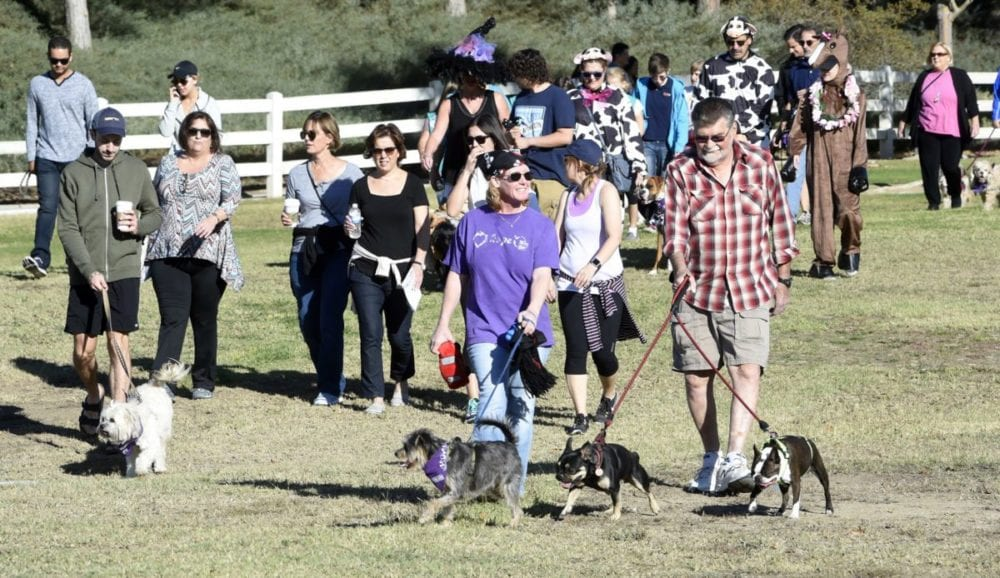 Dozens of attendees participate in the Doggy Lap parade to officially open the American Cancer Society's Annual Bark For Life event held at Bridgeport Park in Valencia on Saturday. Dan Watson/The Signal