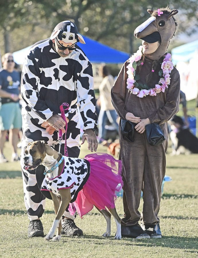 One-year-old boxer, Luna, and John and Isabella Bomben of Valencia primp their costumes as a cowgirl, cow and cowgirl's horse as they prepare for the costume contest at the American Cancer Society's Annual Bark For Life event held at Bridgeport Park in Valencia on Saturday. Dan Watson/The Signal