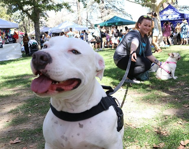Shayna Mintz holds the leash of her pitbull, Rosie, at the 16th annual Bow-Wows & Meows Pet Fair at William S. Hart Park on Sunday.