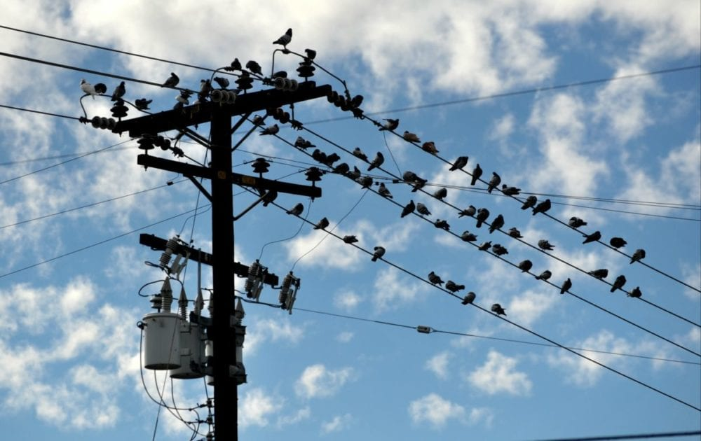 Blue skies and birds come out at Railroad Ave and Market Street in Newhall on Friday morning.  Dan Watson/The Signal