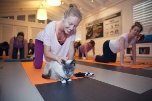Photo credit: Best Friends Animal Society. An attendee at the Me-Om Yoga with Cats class at the NKLA Pet Adoption Center in West Los Angeles takes a moment to interact with an adoptable cat.