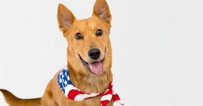 County animal shelters saw increase in calls during July Fourth holiday