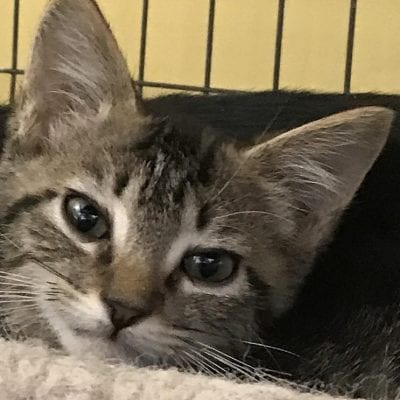 Kitten snatched from mall returned safe and sound