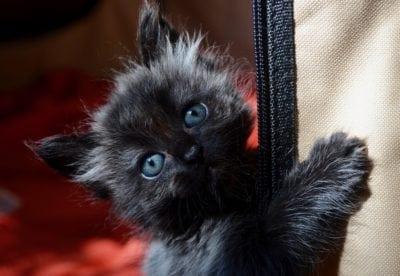 Animal center to host annual kitten shower