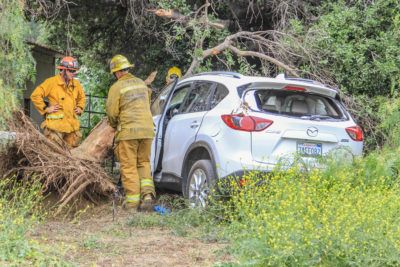 Motorist rendered unconscious after hitting tree, taken to hospital