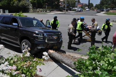 Woman hurt, taken to hospital, after SUV hits tree