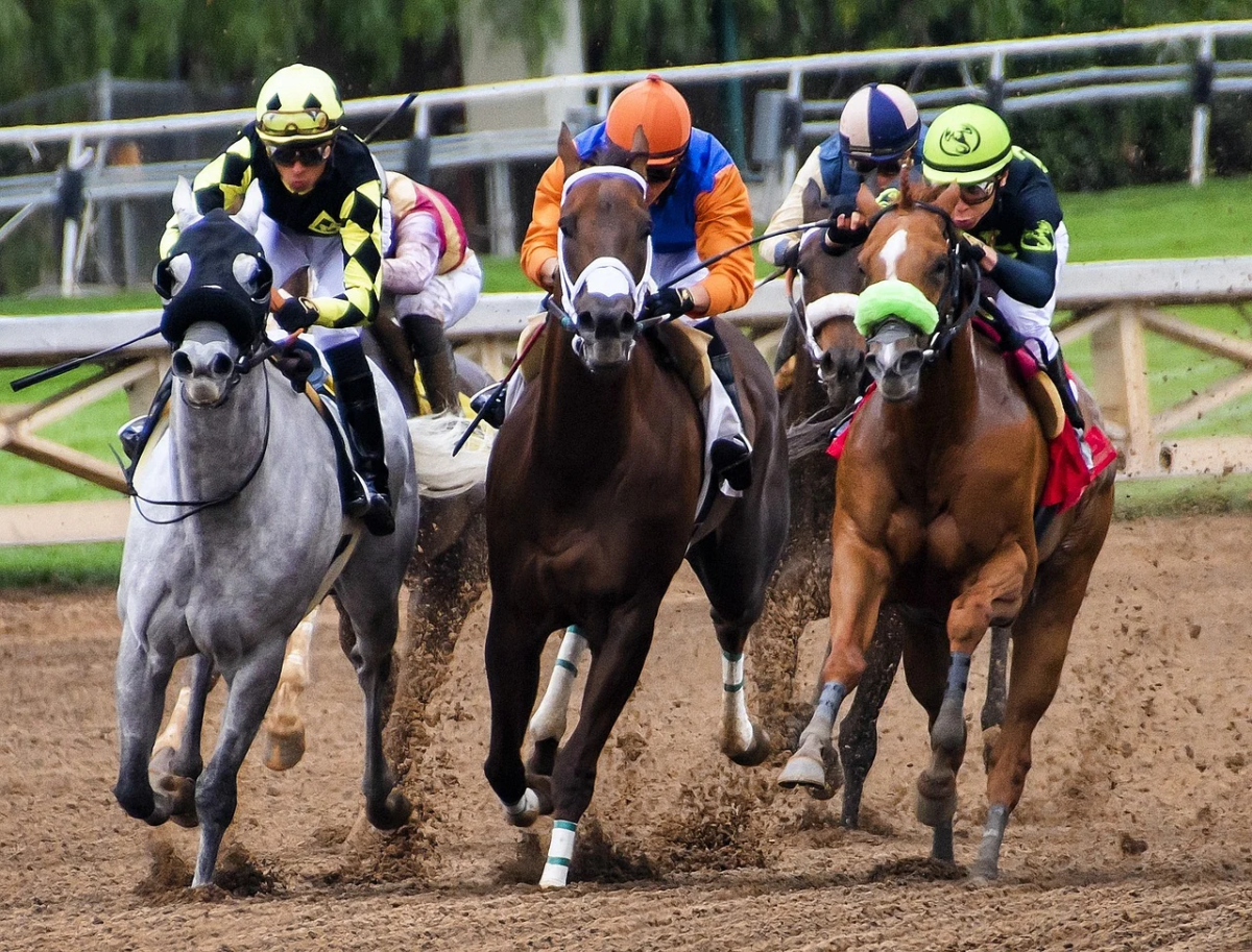 Horse race betting rules on blackjack best sports betting strategy books