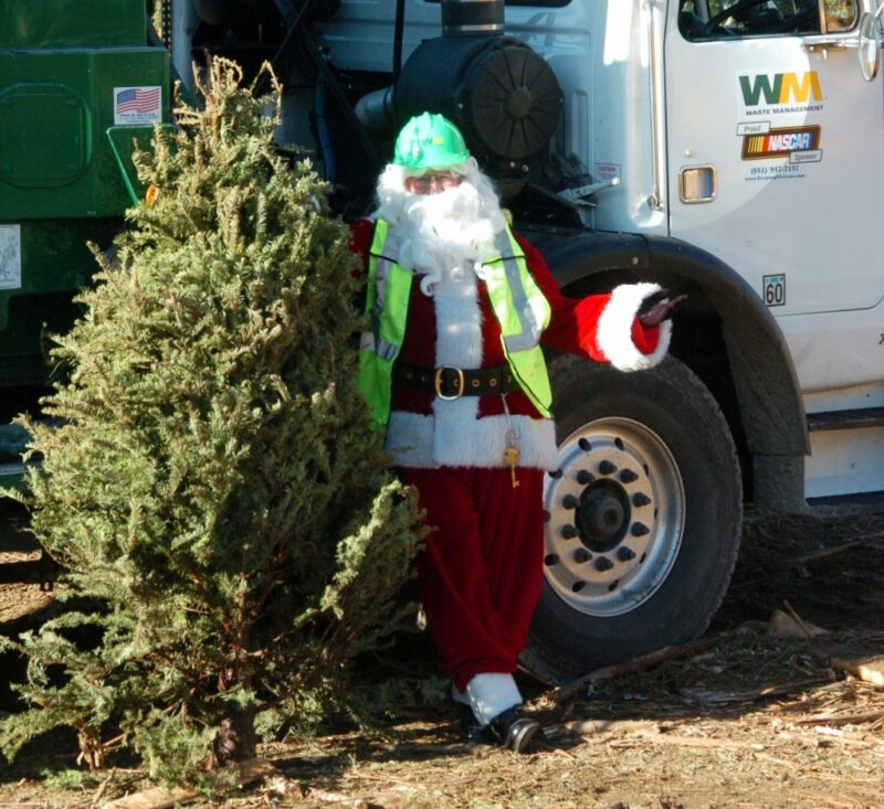 After turkey, it's time for Christmas trees